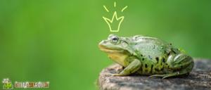 Gewinnspiel Frosch